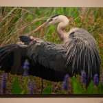 Frontal shot of a photograph of a bird