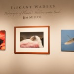 """Title of one of the exhibitions """"Elegant Waders"""""""