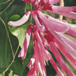 5. Sue Ellen Knowles, St. Augustine Pink, from the tri-state juried competition organized by the Tallahassee Watercolor Society.